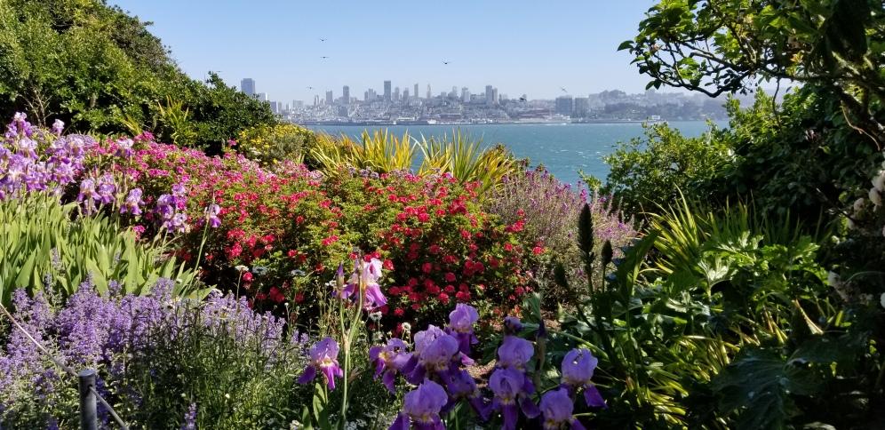 Alcatraz Downtown View